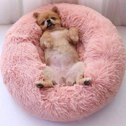 Image of anti-anxiety calming dog bed | Pawstastic