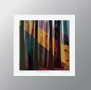 Ancient Pines – Signed Limited Edition Print