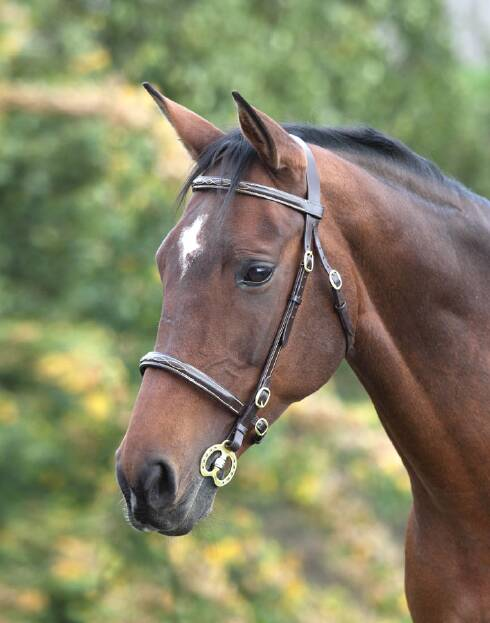 Shires Blenheim Fancy Stitched Inhand Bridle