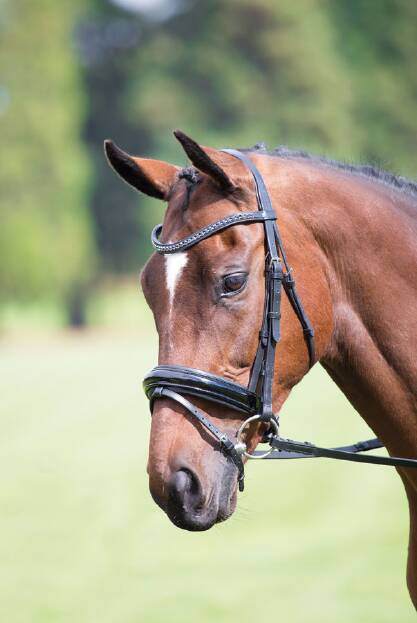 Shires Aviemore Diamante Dressage Bridle