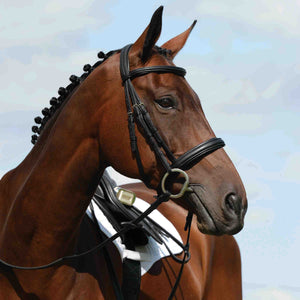 COLLEGIATE SYNTOVIA+ PADDED RAISED CAVESSON BRIDLE