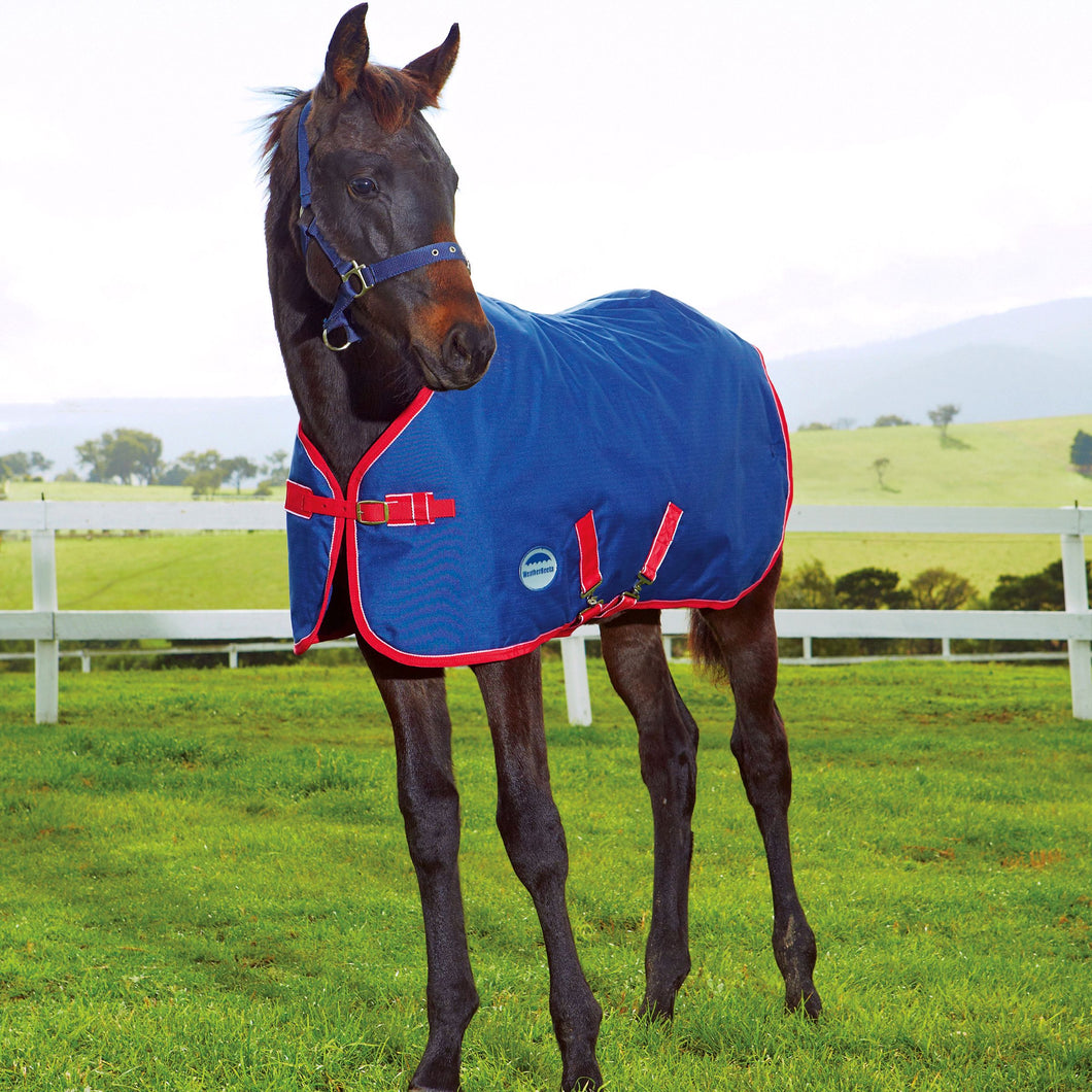 WEATHERBEETA 1200D FOAL STANDARD NECK MEDIUM II