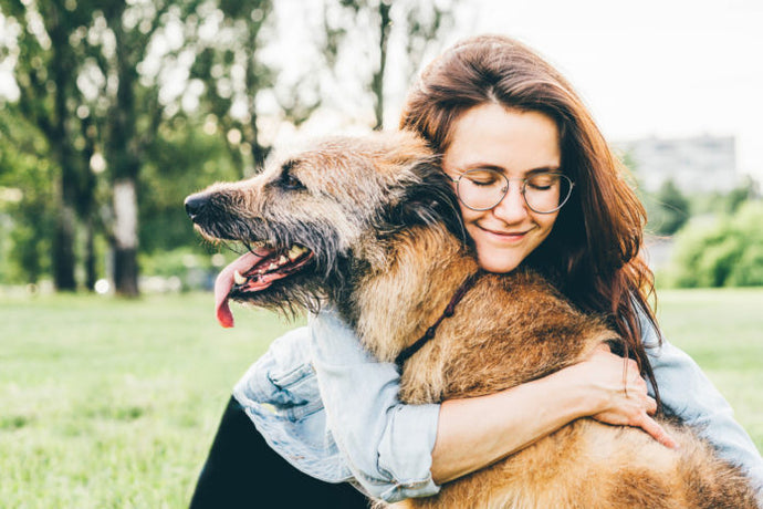 How resveratrol can help dogs with low energy