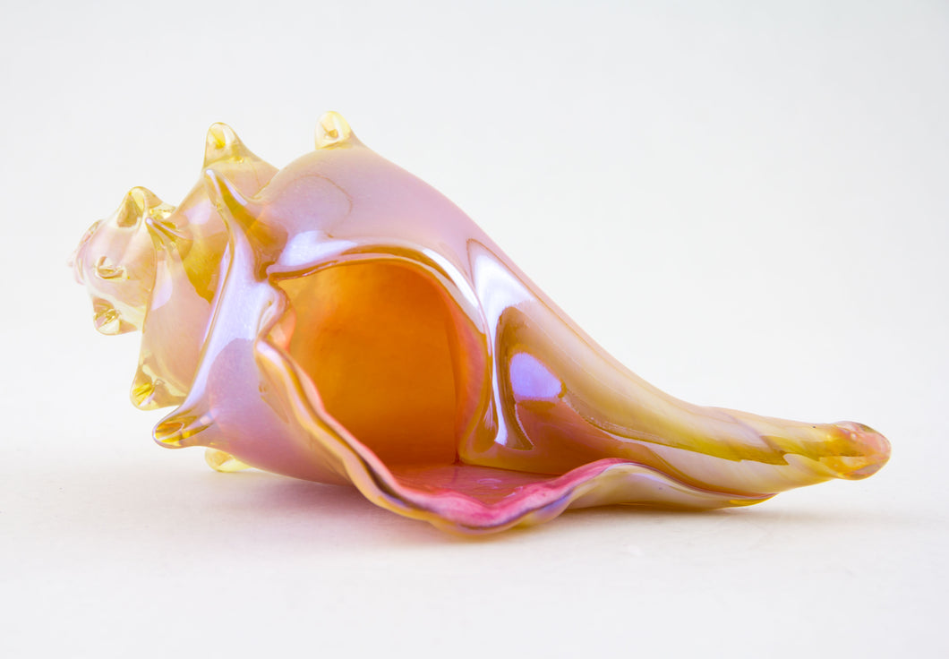 Pink and Amber Shell