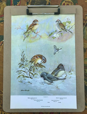 Vintage Bird Book Plates, Collection of 3