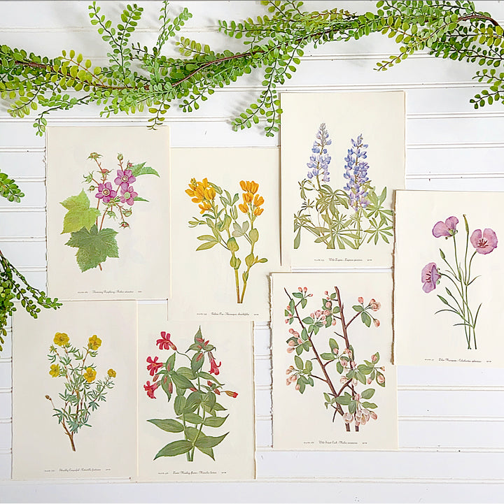 Vintage Floral Botanical Book Plate Prints Set of Seven - Clover Market