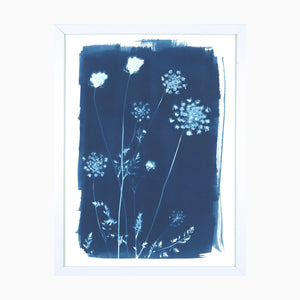 Queen Anne's Lace Art Print - Exclusive