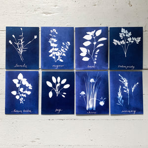 HERBS - boxed set of greeting cards
