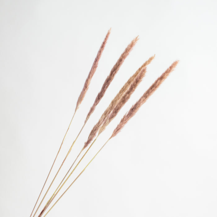 Mini Pampas Stem - Brown