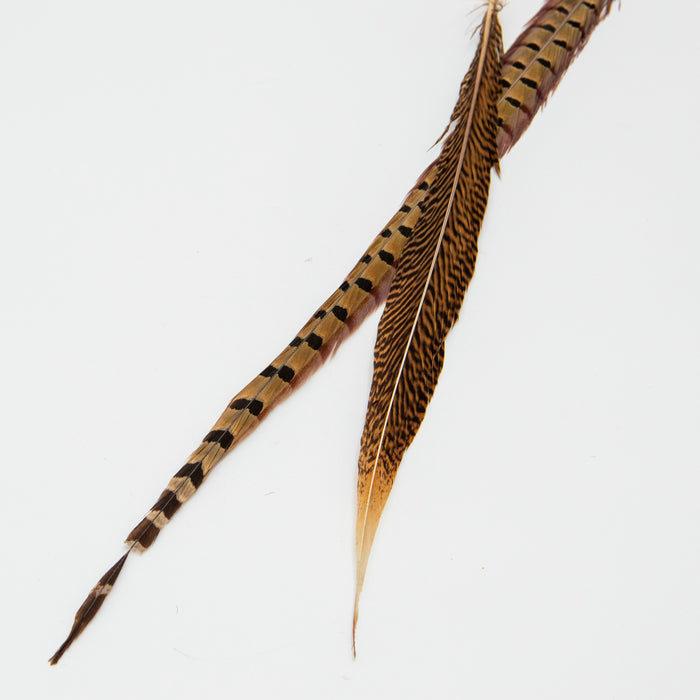 Ringneck Pheasant Feathers