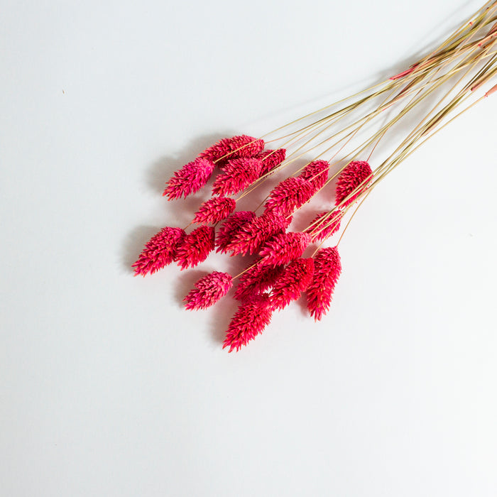 Phalaris Bunch - Raspberry