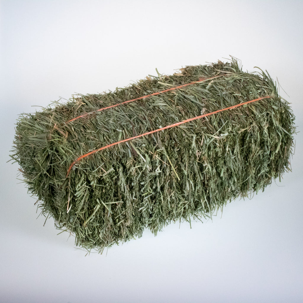 Mini Hay Bale - ORCHARD - BinkyBunny.com House Rabbit Store
