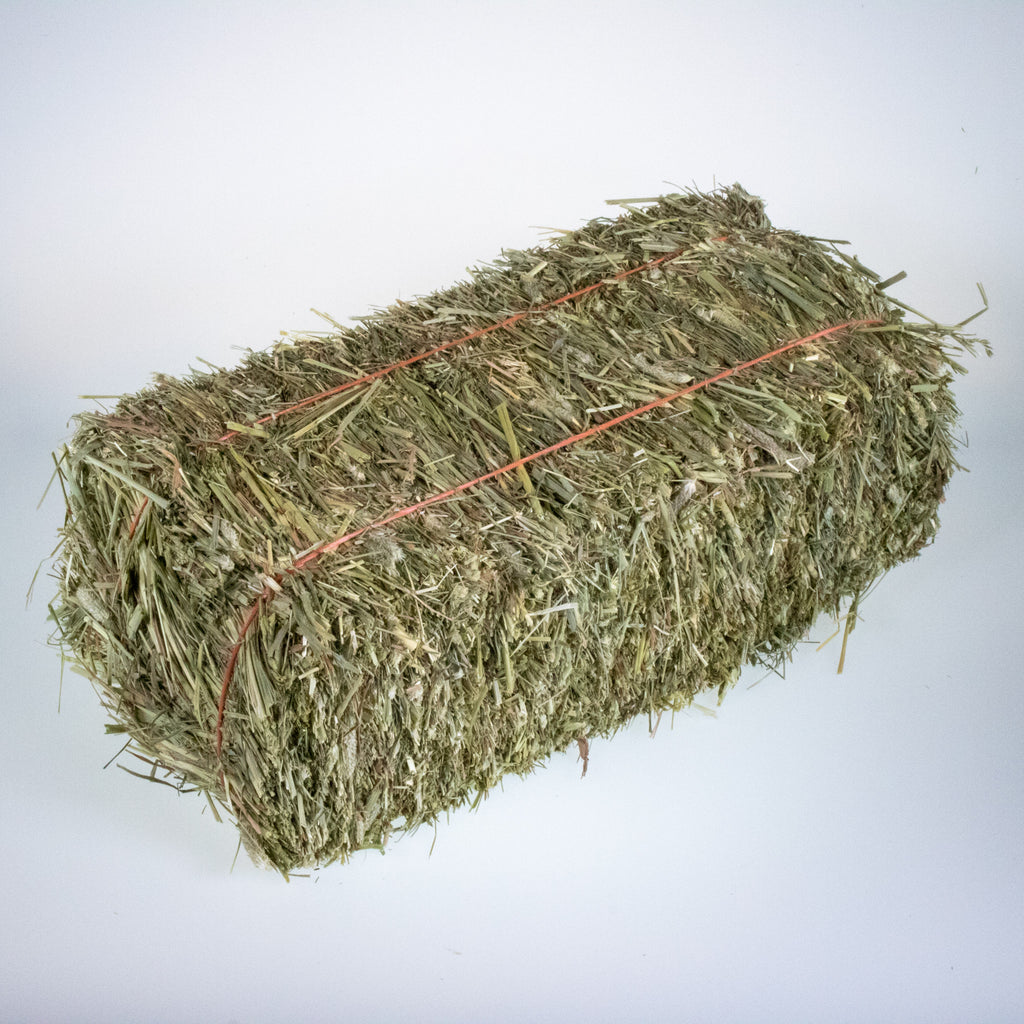 Mini Hay Bale - TIMOTHY BLUE BLEND - BinkyBunny.com House Rabbit Store