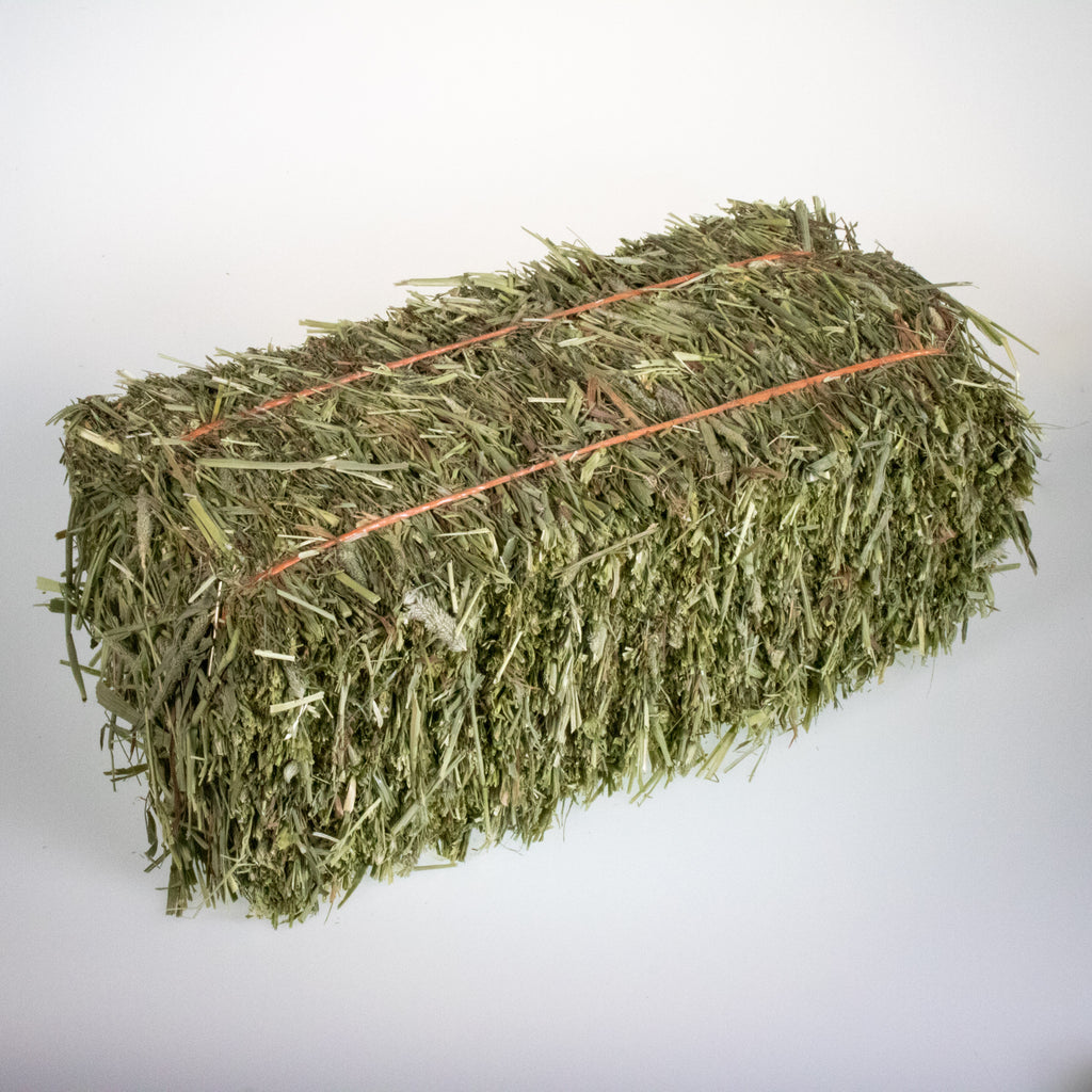 Mini Hay Bale - TIMOTHY (1st Cut) - BinkyBunny.com House Rabbit Store