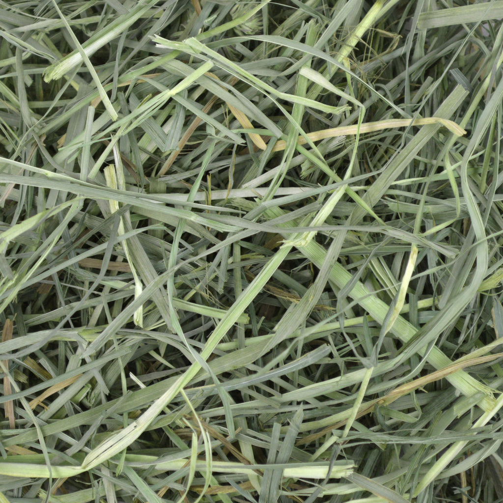 Orchard Grass Hay - 40 oz - BinkyBunny.com House Rabbit Store