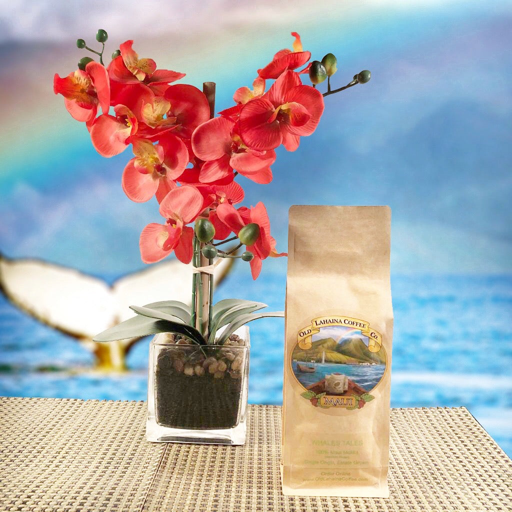 Whales Tales: 100% Maui Mokka Coffee Beans, Medium Roast