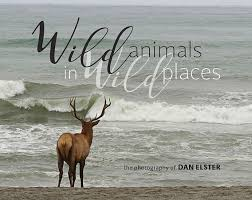 Wild Animals in Wild Places, the Photography of Dan Elster