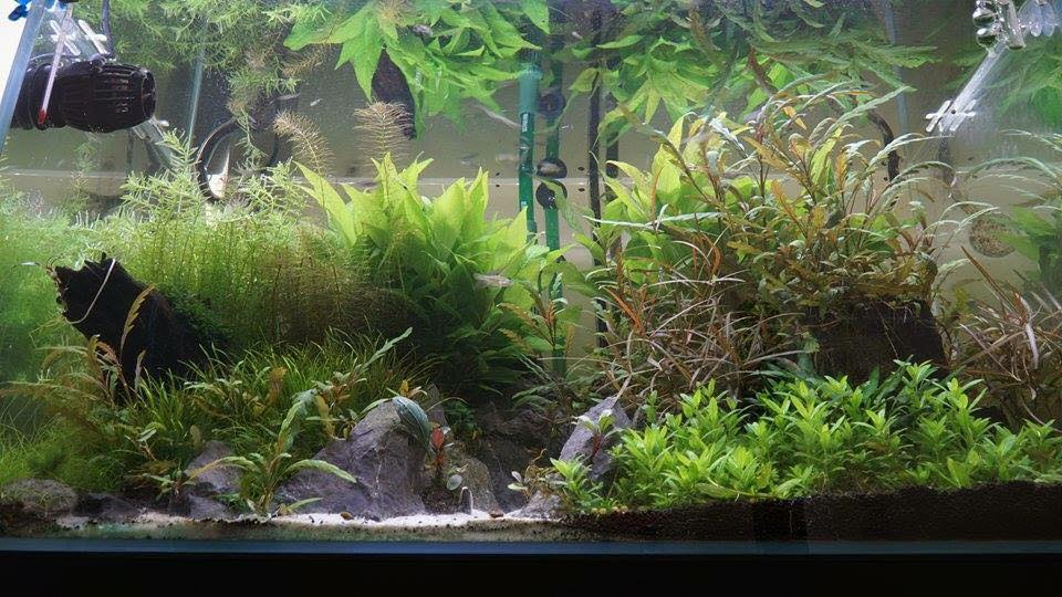 Fresh water aquarium servicing