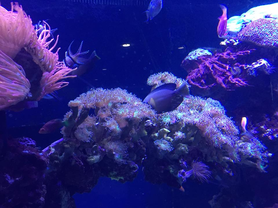 Marine Aquarium servicing