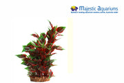 Plastic Plant Red Nesaea W Gravel Base L