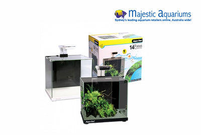 Aqua One Focus 14 Glass Aquarium 14L 30L X 22D X 27cm H (white)