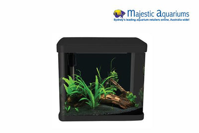 Aqua One LifeStyle 21 Complete Glass Aquarium 32cm 21L Gloss Black