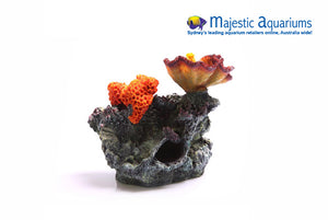 Copi Coral Chalice & Sun Corals on Live Rock Med 27x16.5x19cm