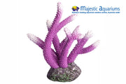 Copi Coral Staghorn Purple