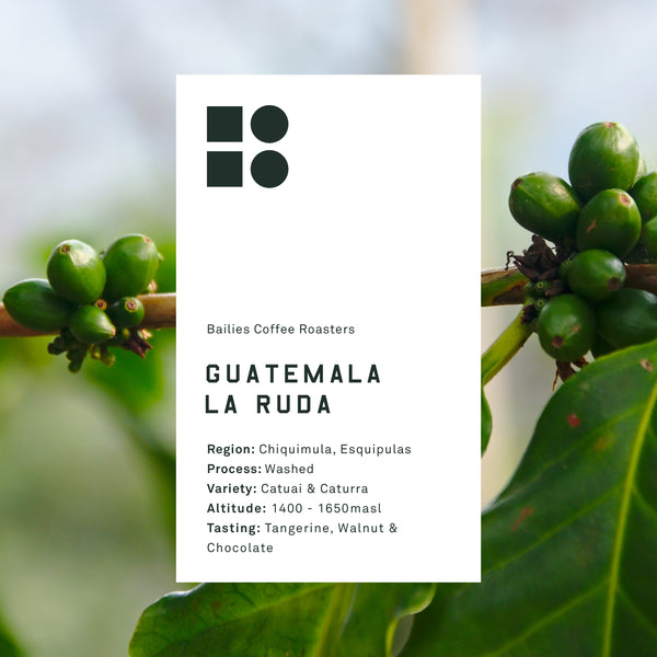 Guatemala La Ruda Washed - Bailies Coffee Roasters