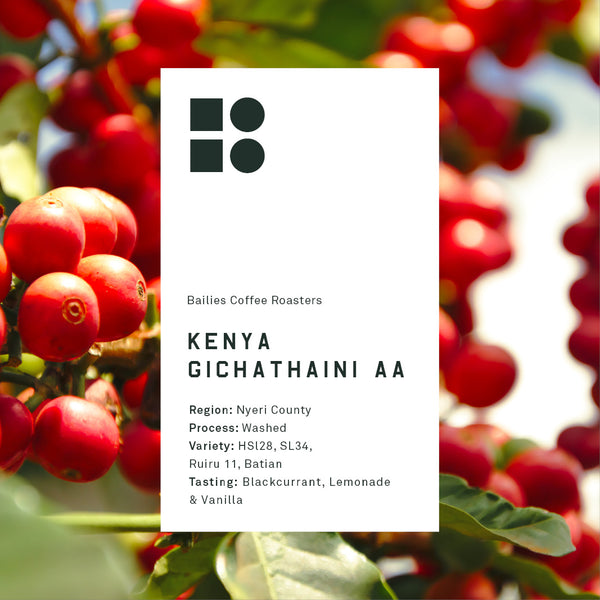 Kenya Gichathaini AA Freshly Roasted - Bailies Coffee Roasters