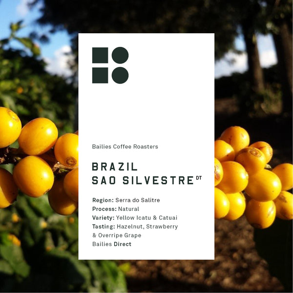 Brazil Sao Silvestre Natural - Bailies Coffee Roasters