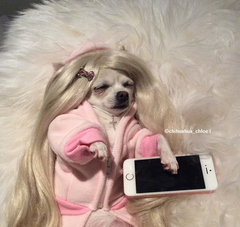 dog with wig on in bed with iphone
