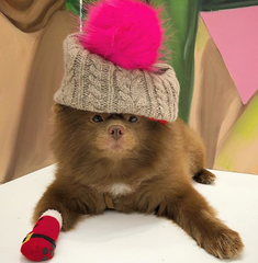 cute dog with hat on