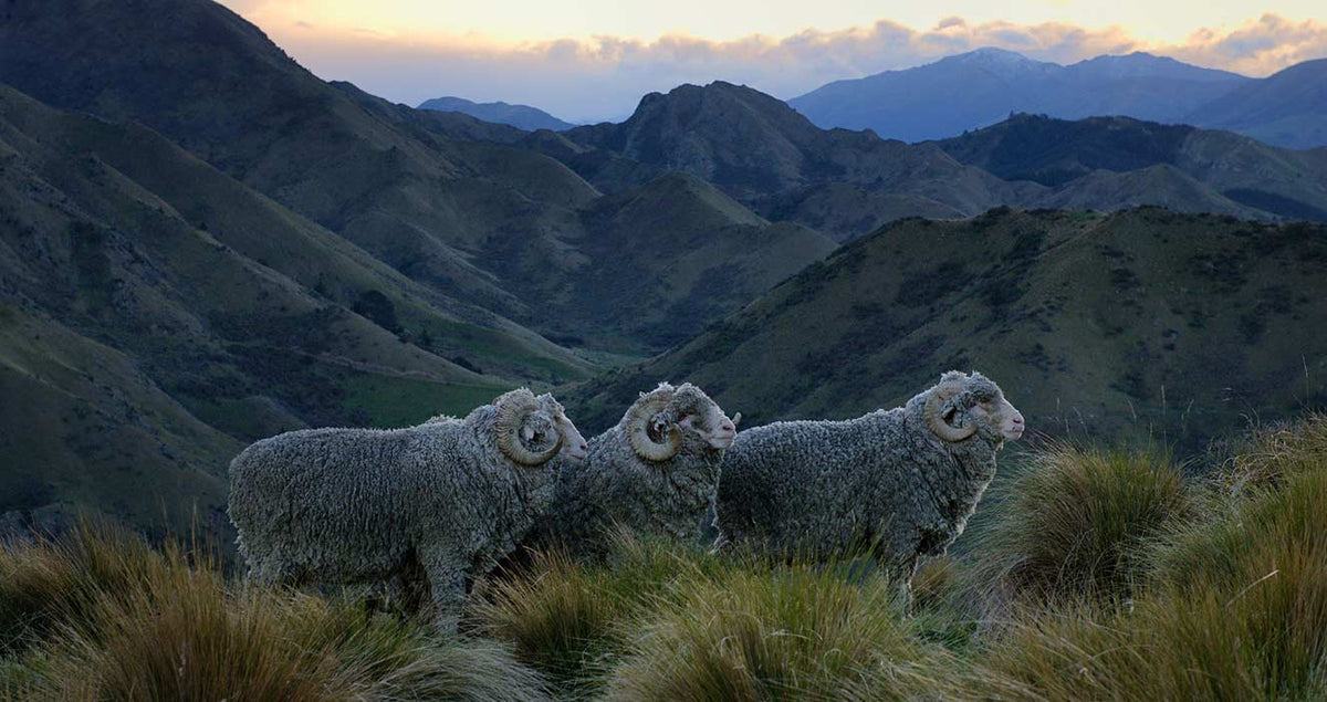 High Country Merino.