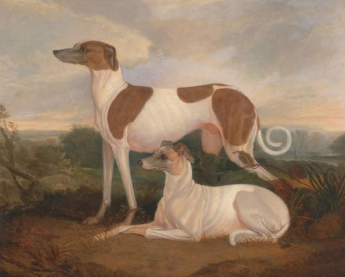 A Couple of Dogs - Painting by Numbers - Paint by Numbers Kits