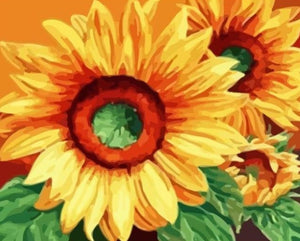 Beautiful Sunflower Painting by Numbers - Paint by Numbers Kits