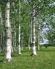 Load image into Gallery viewer, Green Birch Forest Painting by Numbers - Paint by Numbers Kits