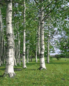 Green Birch Forest Painting by Numbers - Paint by Numbers Kits