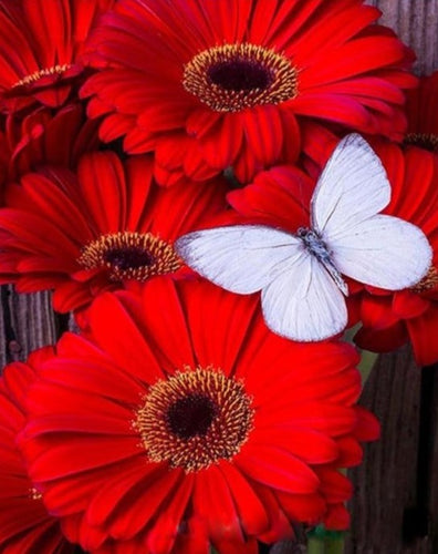 White Butterfly on Red Flowers - Paint by Numbers Kits