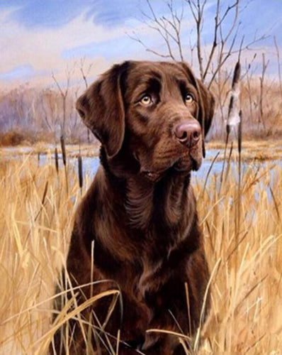 Black Labrador in yellow Wheat Field - Paint by Numbers Kits