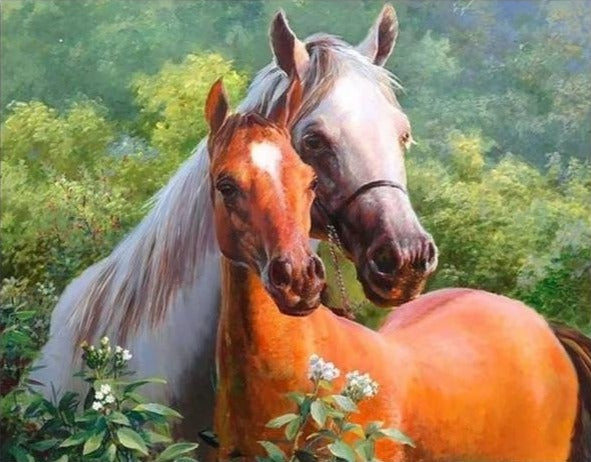 Beautiful Horses - Painting by Numbers - Paint by Numbers Kits