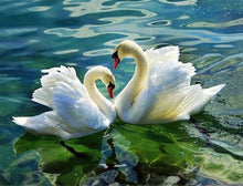 Load image into Gallery viewer, My Precious Paint by Numbers Swan Couple Painting - Paint by Numbers Kits