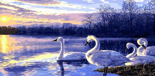 Swan Family Sunset Painting By Numbers - Paint by Numbers Kits