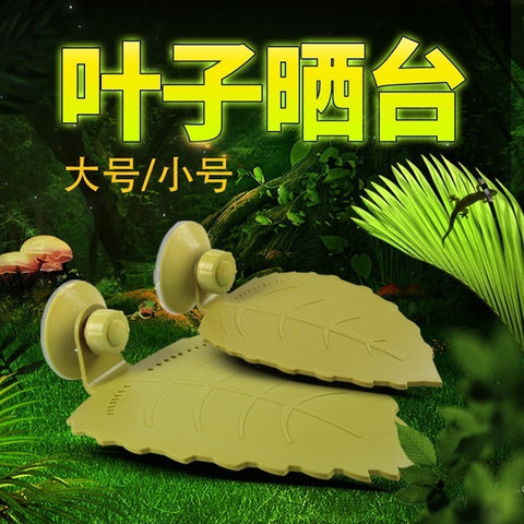 Brazilian Turtle Grass Yellow Edge Turtle Balcony Razor Head Sun Back Calcium Floating Platform