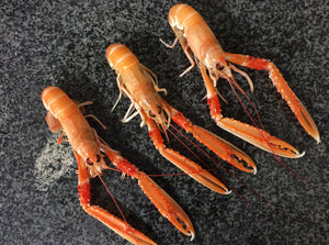 Fresh Scottish Langoustines (500g)