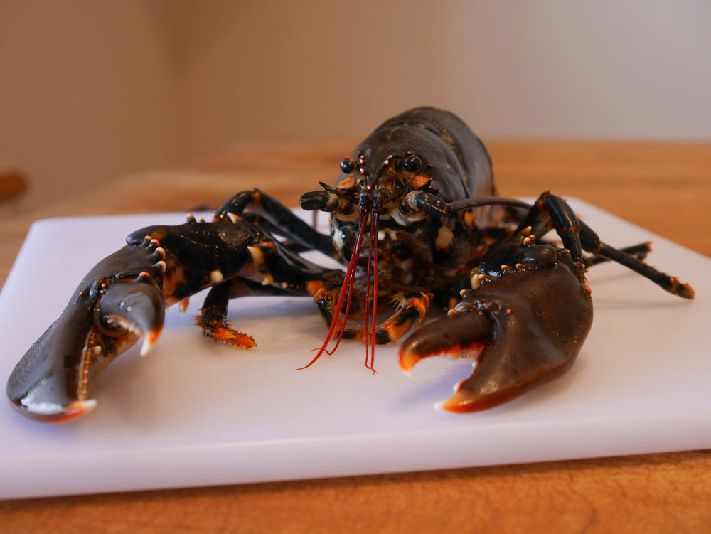 Live Scottish Lobster