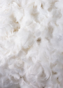 Fluffy Feather 2