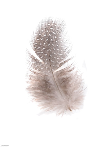 Fluffy feather