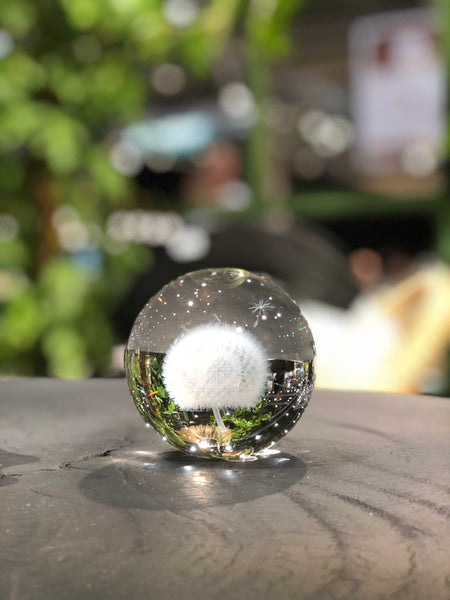 Crystal ball - Dandelion - Glass - Ø 8 cm