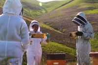 beekeepers in scotland